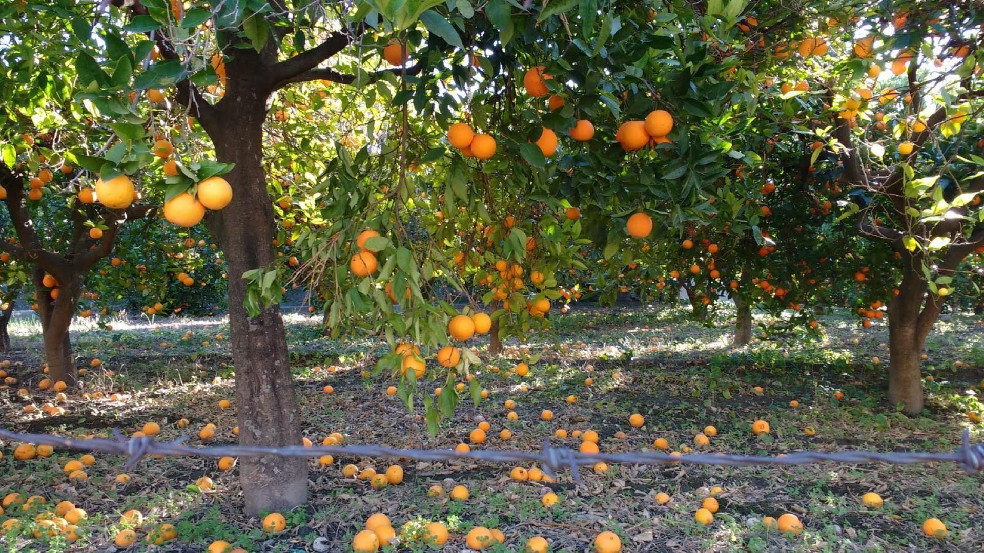 casa-niwalas-naranjas-groot.jpg